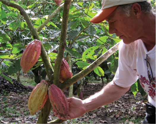 Heirloom Cacao Preservation Initiative